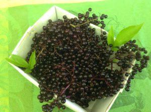 Deep purple elderberry beauty